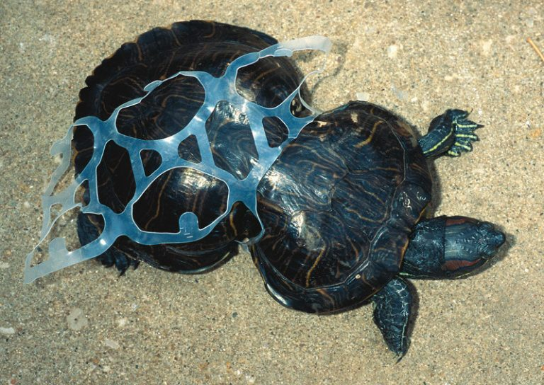 plastic, turtle, plastic pollution, water pollution