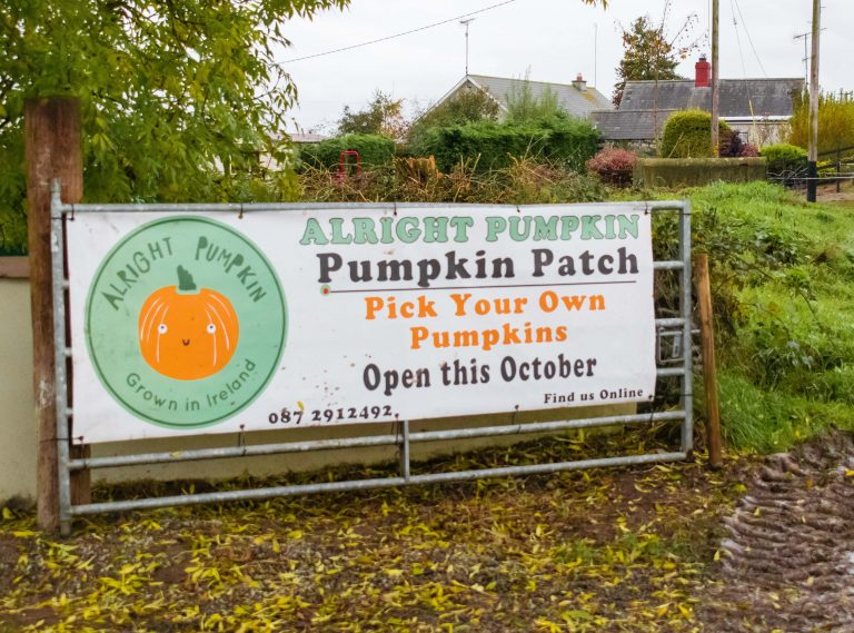 alright pumpkin patch meath