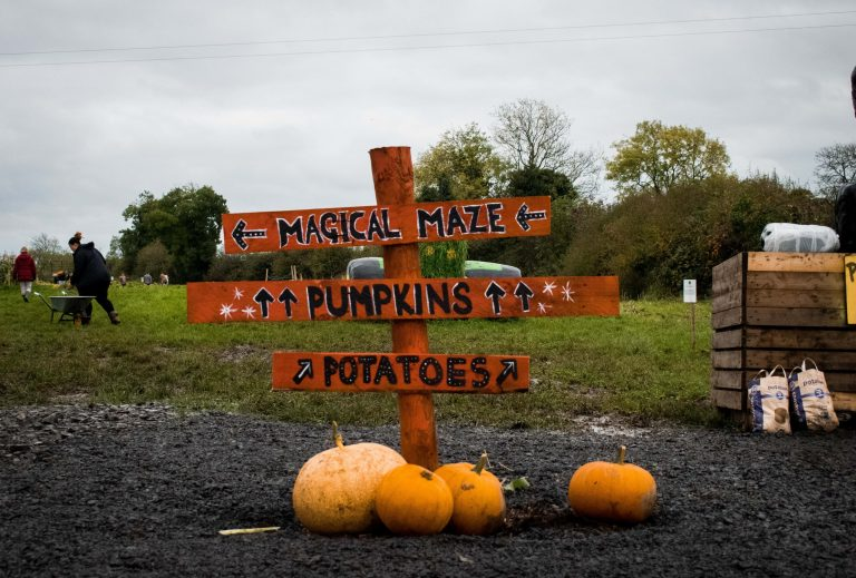 pumpkin patch meath halloween activities