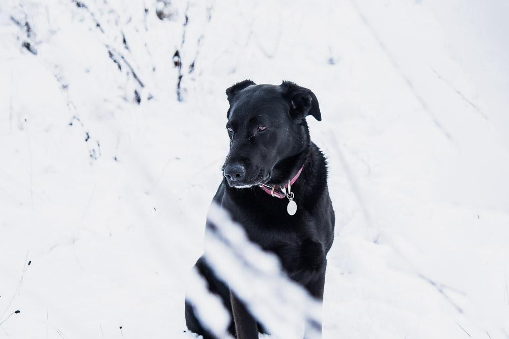 snow, dog, ireland