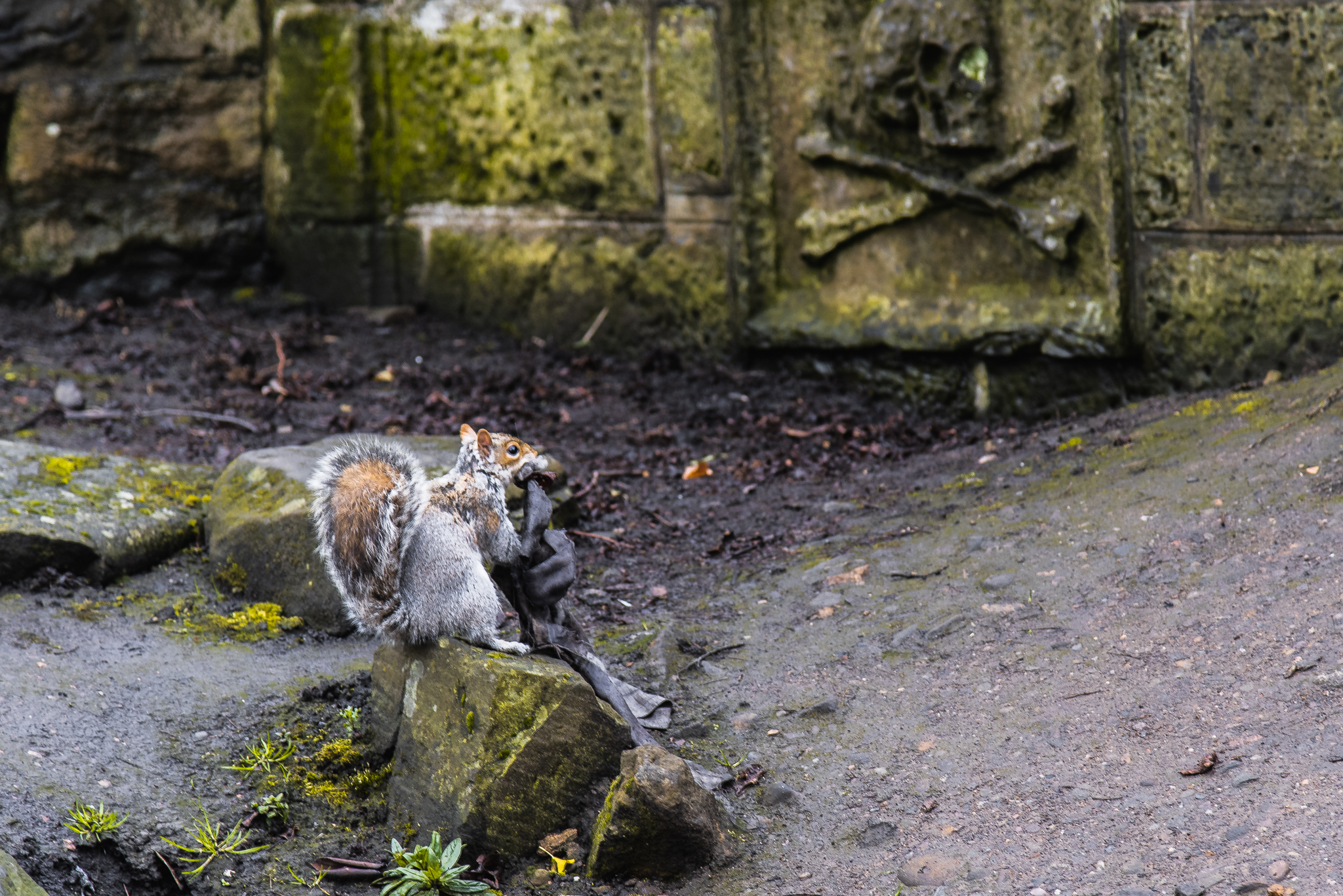 squirrel edinburgh