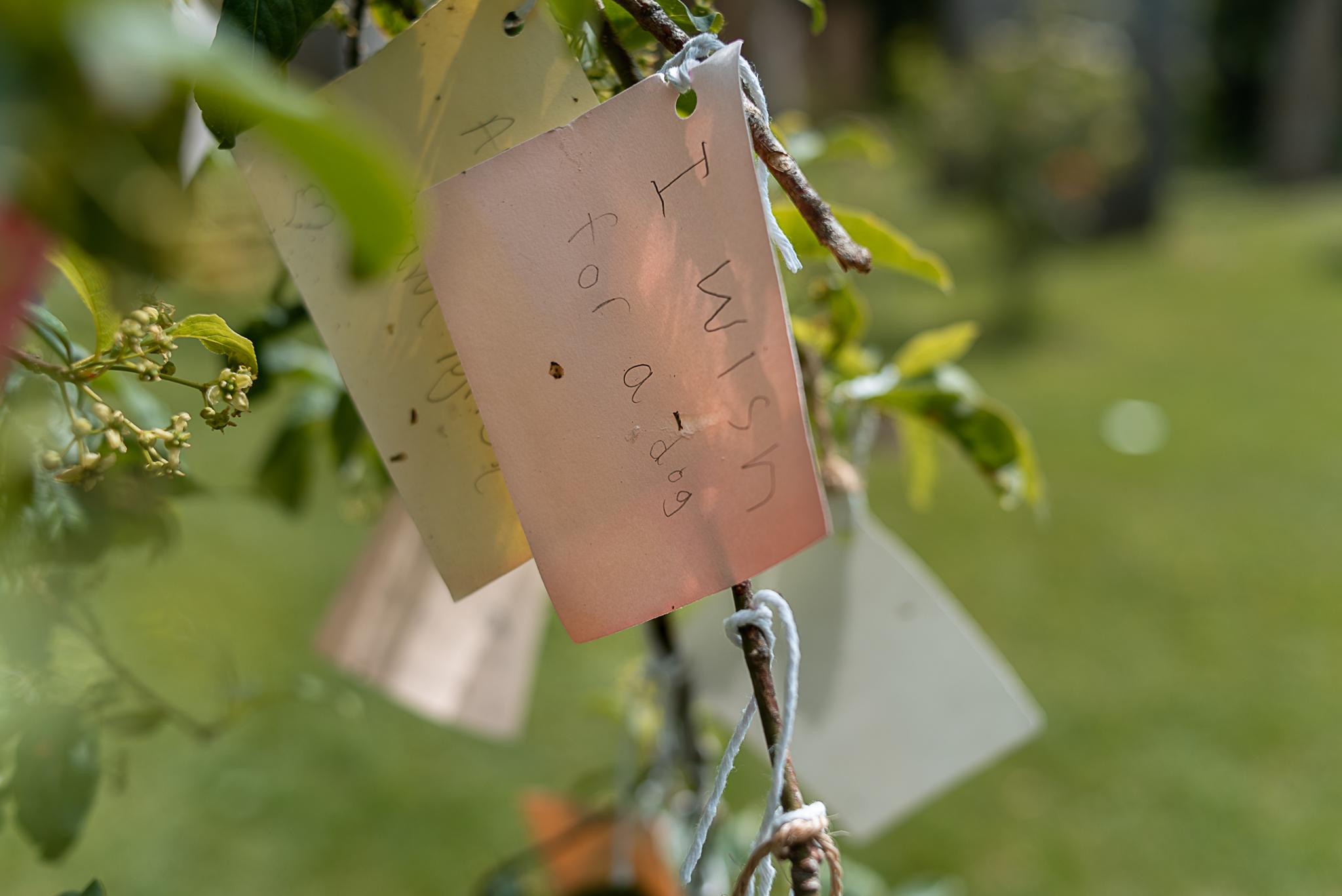 brigit's garden, tinyboots, connemara, galway