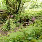 brigit's garden, wildflowers, woods, green, nature