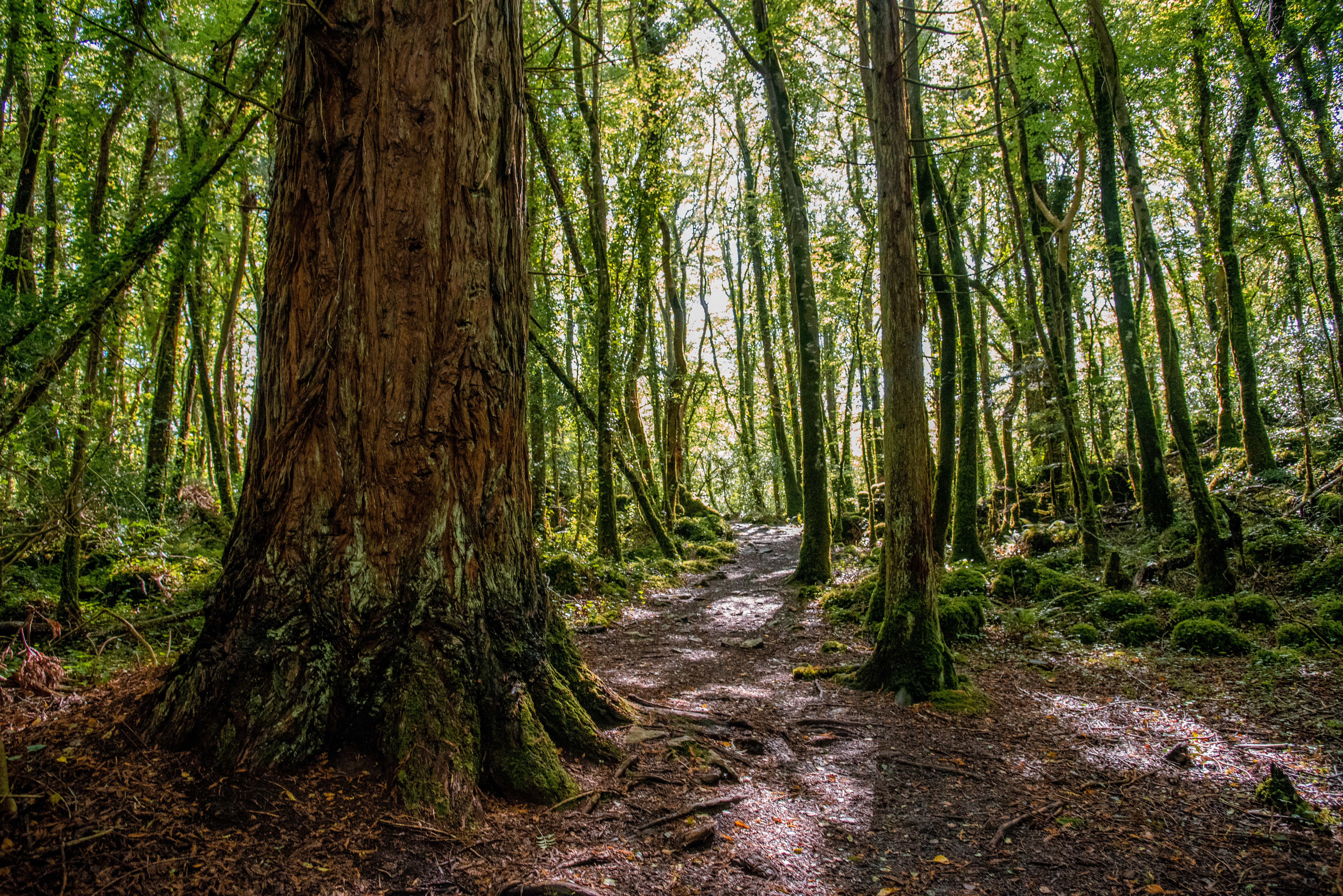 cong, woods, woodland, coillte, things to do in cong, galway, mayo
