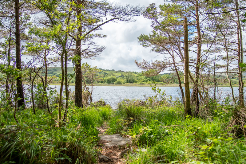 Roscahill woods galway, woods, forest, green, lake