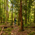 Roscahill woods, galway, connemara