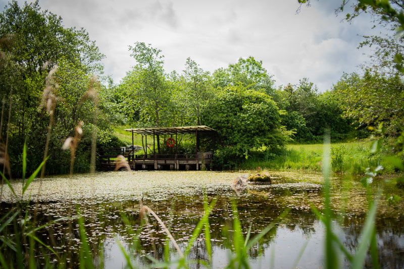 fun activities for kids in galway, nature, lake, reflection, green