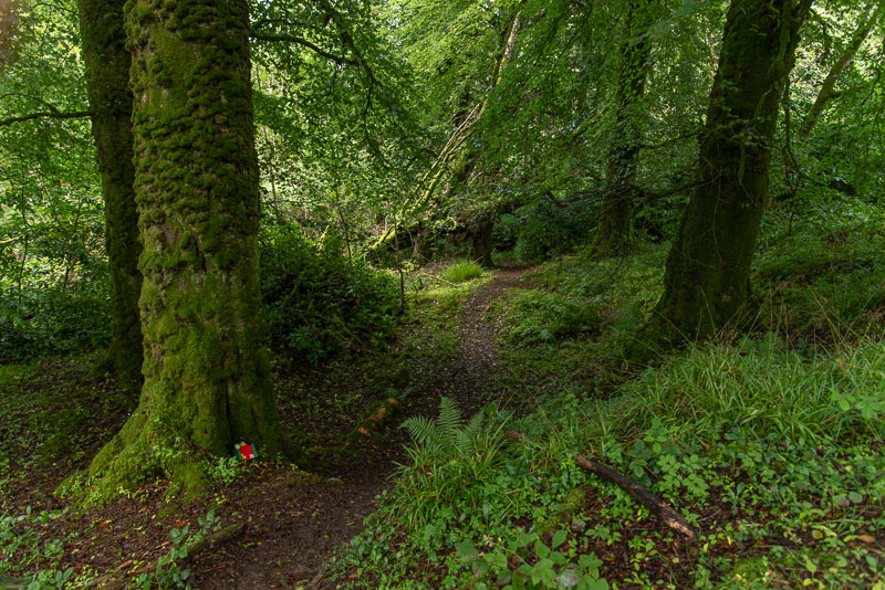tuam, hiking trails in Galway, things to do, outdoors, adventure